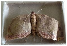 Script Moth  . One from a new series of work, Moths a theme I return to often especially at this time of year,fragility ,decay, beauty, memo...