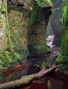 The Devil's Pulpit in Scotland Even though it's close to Glasgow - it's still one of Scotland's best kept secrets. The natural gorge has intense greenness, dramatic geology....and was a secret meeting places for druids, and later, covenanters.