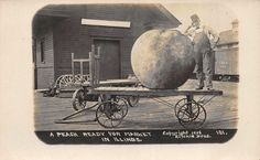 1908 Exaggeration Real Photo Postcard Peach Ready for Market in Illinois~112787