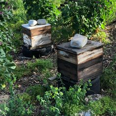 The beehives outside my studio they are also always working!