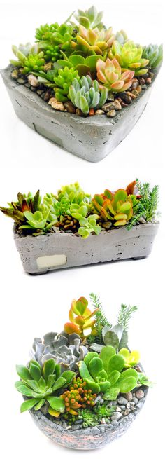 I love this!! Make your own cement planters and then put succulents in them!!