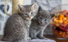 Download wallpapers small gray kitten, 4k, pets, cats, cute little animals