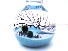 Marimo moss ball terrarium in the periwinkle sea, with sea fan and abalone seashells, limited edition on Etsy, $32.00