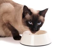 If you find yourself wanting to feed your cat the best diet available and are on a budget? Make your own healthy cat food at home! Siamese Kittens, Cats And Kittens, What To Feed Cats, Cat Eye Problems, Healthy Cat Food, Purebred Cats, Les Croquettes, Cat Allergies, Pet Care