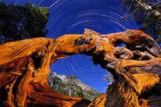 near Eagle Falls, Lake Tahoe by Dan Newton.