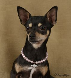 Liza is a very petite, lovable jewel who just wants to be cherished.  She is a pretty Miniature Pinscher & Chihuahua mix, 3 years young, a spayed girl, ready for adoption at Nevada SPCA (www.nevadaspca.org).  Liza is housetrained and good with most dogs (though picky with some).  Special thanks to Pet'ographique (www.petographique.com) for illuminating her spirit in this brand new portrait to help her find a forever home.