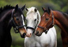 (82) Horse Kingdom