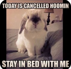I adopted my rabbit while suffering with depression and he really did do something to help me. Maybe all pets can. Mini Lop Bunnies, Cute Baby Bunnies, Funny Bunnies, Bunny Bunny, Bunny Rabbits, Baby Animals, Funny Animals, Cute Animals, Bunny Quotes
