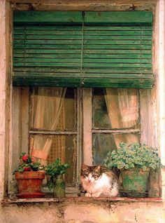 green slatted blinds, potted plants & cute kitty on a window sill