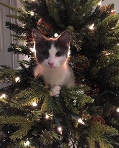 """""""This is my house. I have to defend it."""" 