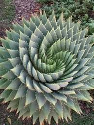 Image result for sacred geometry in nature
