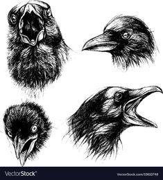 Crow head drawing line work set 01 vector image on VectorStock Crows Drawing, Bird Drawings, Animal Drawings, Tattoo P, Raven Tattoo, Crow Images, Ink Pen Art, Raven Bird, Crow Art