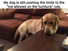 This dog with a rebellious spirit.