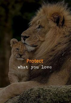 Positive Quotes : Protect what you love. Positive Quotes : Protect what you love. Strong Quotes, Positive Quotes, Motivational Quotes, Inspirational Quotes, Wisdom Quotes, Words Quotes, Sayings, Text Quotes, Music Quotes