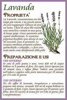 Lavanda & co. Holistic Remedies, Natural Remedies, Natural Life, Natural Health, Physical Fitness Program, Plants Are Friends, Green Life, Medicinal Plants, Mother Nature