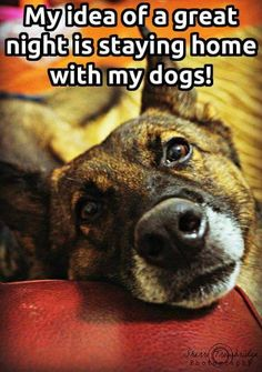 yep, gym dogs, writing and reading pure relaxtion! Who says you gotta have some guy hanging on your every word?♡Simplicity for a complex mind. Cute Puppies, Dogs And Puppies, Cute Dogs, Doggies, I Love Dogs, Puppy Love, Dog Pictures, Animal Pictures, Animals And Pets