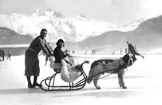 Vintage Image St Moritz 1930 Sleigh Ride St Bernard Dog B&w Christmas Card Charles Spencer Chaplin, St Moritz, St Bernard Dogs, Ski Holidays, Vintage Images, Vintage Photographs, Great Britain, Skiing, Pup