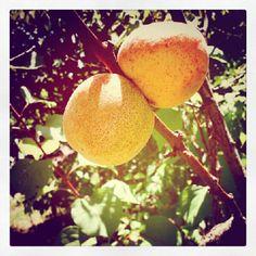 "@larsenio's photo: ""#instago #instagramers #igerspescara #igers #instadaily #ipopyou #instagramhub #instamood #igersitalia #igersmarche #ig_daily #instagood #statigram #all_shots #bestoftheday #orange #daily #golosidifuturo #fruit"""