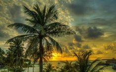 Preview wallpaper maldives, palms, trees, shadow, sea, ocean, beach, hdr