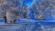 Zima - Szukaj w Google