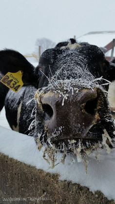 Holstein World Photo of the Day Archive