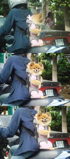.I want a moped just so I can do this to gatsby