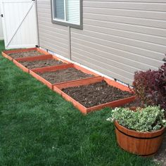 Our little garden ( in progress )