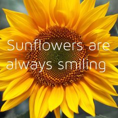 Sunflowers are always smiling. Yes they certainly seem to be and I love having them around!