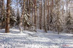 Зимний пейзаж на окраине города Дубна.Россия.(1)