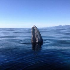 Great day whale watching in Tofino on Vancouver Island, British Columbia.