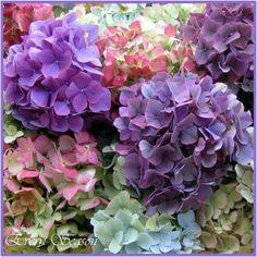 #purpleflowers #pretty