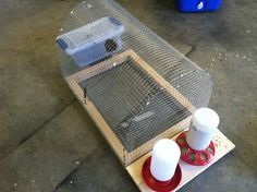 Easy to build quail cage and holds up to 5 quail!