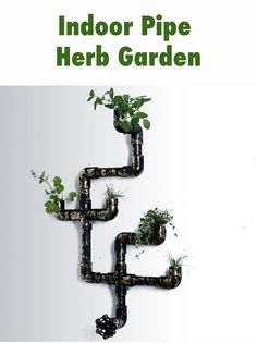 Grow herbs indoors with this easy pipe planter!