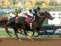 Shared Belief bounced back from a horrible trip in the Breeders' Cup Classic (gr. I) with his third grade I victory of the year, holding off a game Conquest Two Step by a neck in the $300,000 Malibu Stakes (gr. I). 12/26/14