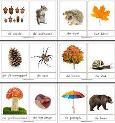 * 32 woordkaarten met foto's bij herfstwoorden. Veel verschillende woordkaarten!