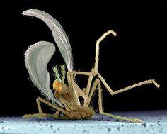 Voker Steger - Des insectes écrasés sur des pare-brises au microscope