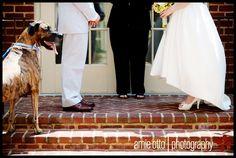 Virginia wedding at Hotel Monaco: Valerie + Adam Elope! We love the dog in this pic.