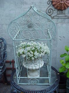 Birdcage with flowering plant inside. Repurposed Outdoor Garden idea / Container Gardening