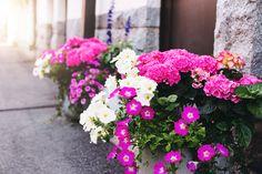 Happy Midsummer ♥ - Mariannan