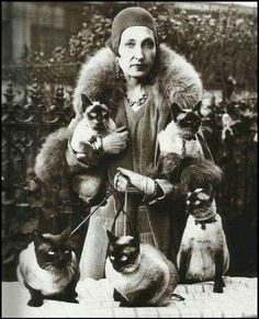 'i am siamese if you please' . lady w her five siamese cats Crazy Cat Lady, Crazy Cats, Siamese Cats, Cats And Kittens, I Love Cats, Cool Cats, Image Chat, Photo Chat, Cat Posters