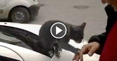 Cats always know what and who they want. And sometimes, their minds are made up so instantly it's enough to make one's head spin!    The kitty cat in the adorable clip just below is no exception.    From