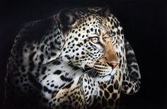 Carla Grace Art Colouring pencil on bristol board Leopard in the shadows Wildlife Paintings, Wildlife Art, Grace Art, Bristol Board, Lion Art, Colored Pencils, My Arts, Canvas, Artwork