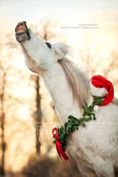 Merry Christmas & New Year Horse