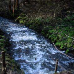 Vandløbet Aa Å #Assens #visitfyn #vistdenmark #fyn #nature #nature_perfection #naturelovers #mothernature #natur #loveit #denmark #danmark #dänemark #landscape #å #river #fynerfin #vildmedfyn #mitassens #assensnatur