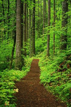 The path to Peace of Mind by Jacob Barr - This is the Forest path along the trail to Elowha falls (Warrendale, Oregon). The Woods here were so very green and lush and the Dark clouds with the threat of rain made them so much more vibrant.