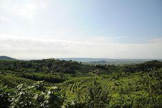 #prosecco #mionetto #valdobbiadene #italy #wine