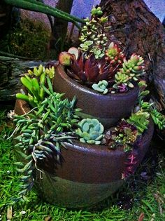 DIY: Tiered Succulent Garden # 2 Source by rosellamrazram Colorful Succulents, Succulents Garden, Outdoor Plants, Outdoor Gardens, California Garden, Back Gardens, Garden Art, Garden Ideas, Garden Landscaping
