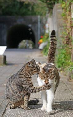 「ニャニャニャ・・・」何やら内緒話?藍島隧道付近で見かけた仲良しの2匹=10月29日、福岡県北九州市の藍島