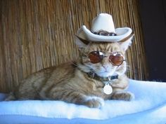 Now that is one cool cat ♥