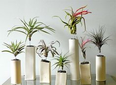 Air plants ceramic containers different height air plant display ideas